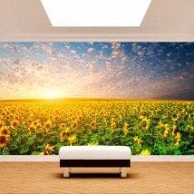 Girasoli di murales muro foto