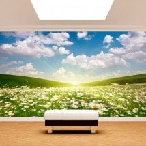 Foto muro murales fiori margherite bianche