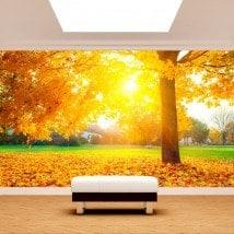 Foto muro murales gli alberi in autunno