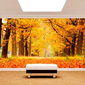 Autunno di alberi di foto parete murales