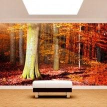 Autunno alberi Fotomural
