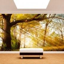 Fotomurali albero natura