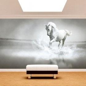 Fotomural. cavallo bianco