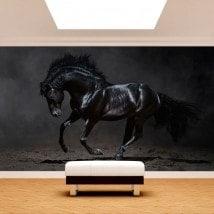 Fotomural nero cavallo