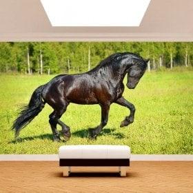 Parete Fotomural cavallo nel campo