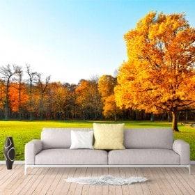 Fotomural alberi in autunno