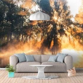 Raggi di murales muro di foto di sole sul fiume