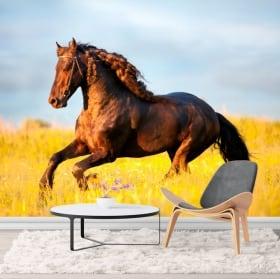 Murales a cavallo nel campo
