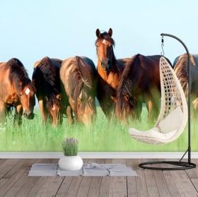 Murales in vinile cavalli nel campo
