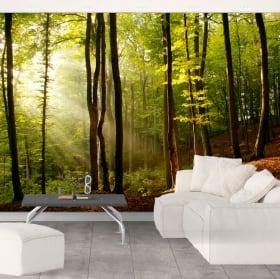 Murales tramonto della foresta degli alberi