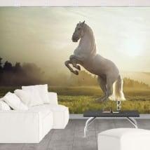 Murales vinile cavallo bianco