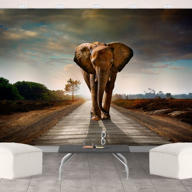 Murales in vinile elefante