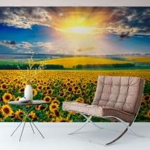 Murales campo al tramonto di girasoli