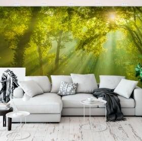 Murales in vinile alberi nella foresta