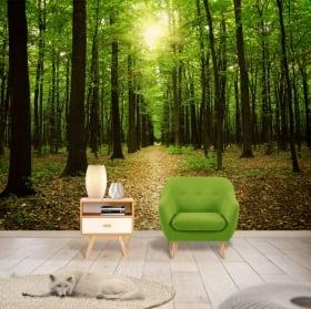 Murales in vinile raggi del sole nella foresta