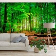 Murales vinile alberi nella foresta