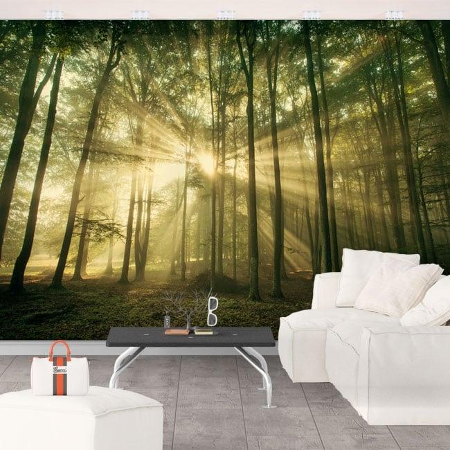 Murales in vinile raggi di sole e alberi in autunno