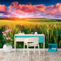 Murales papaveri nel campo al tramonto