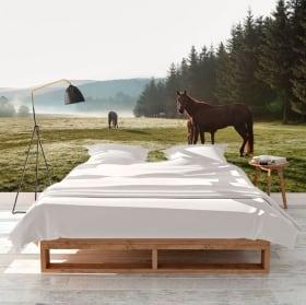 Murales in vinile cavallo bianco