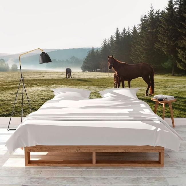 Murales cavalli nel campo